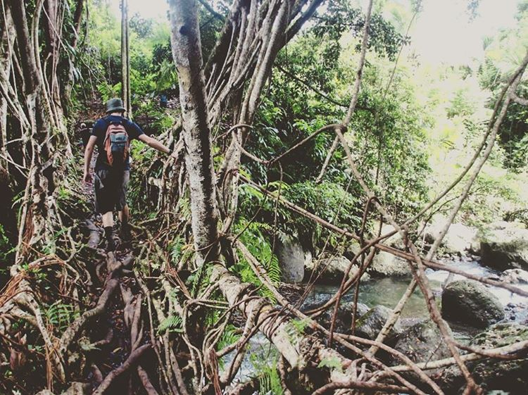 V i n e B r i d g e s . . . I went on a trek to a small hamlet near the village of Topinang and discovered these incredible vine bridges spanning the river. They really were a thing of beauty hidden away within the forest of Bougainville.