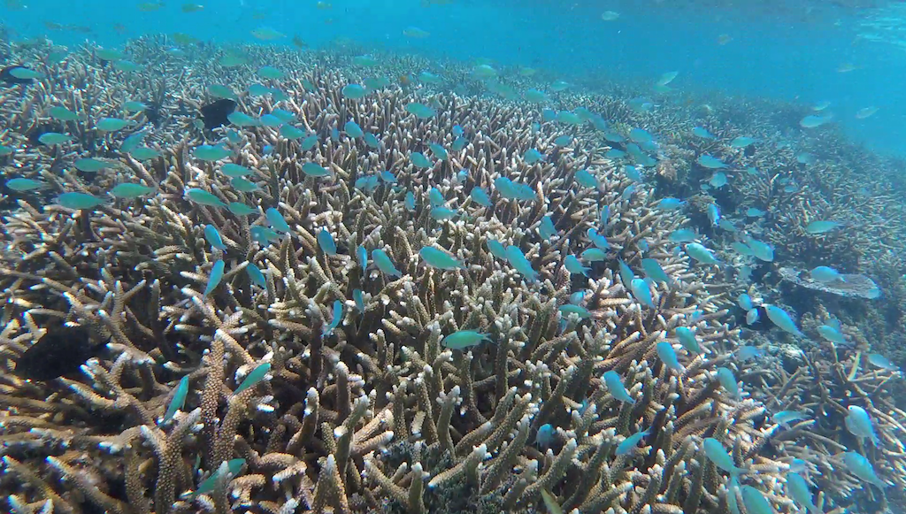Snorkel Pokpok Island – Bougainville, Papua New Guinea