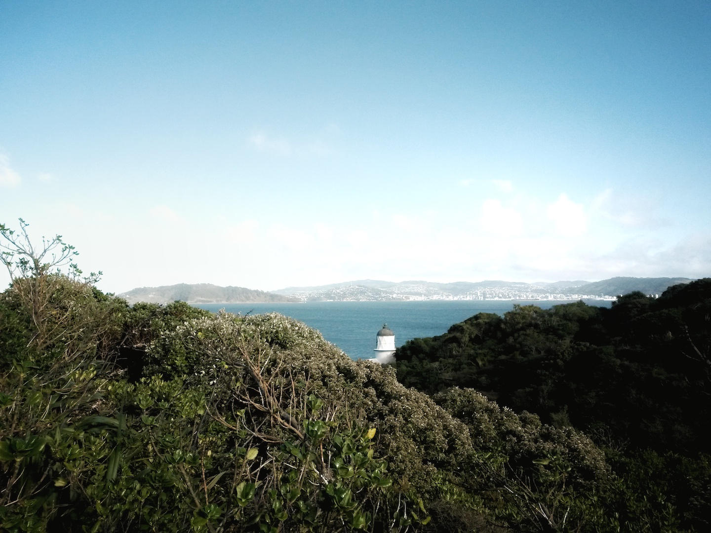 Wellington Walks You'll Want To Explore